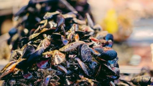 Shellfish at the Ballarò street market in Palermo, Sicily