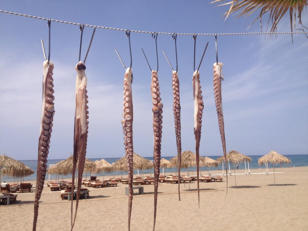 Octopus Drying On The Beach Rethymnon, Crete